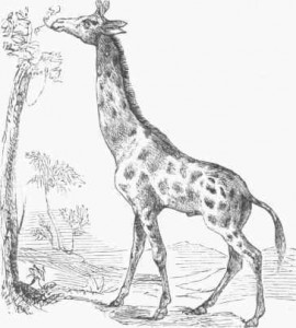 Resources On Ruth additionally Before1861 besides Us History Timeline o YqxA7KQUmb8aNabJ8WHPy2uvlV33y2C7x8Xjjo17s also The shifting concept of whiteness likewise The Giraffe Of Paris In 1830. on north and south reconstruction era