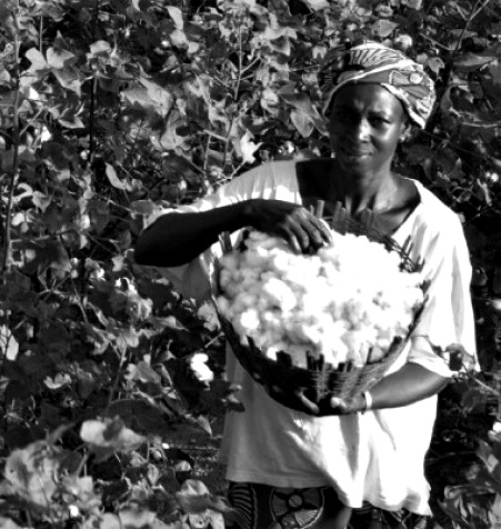 African Cotton Harvesting