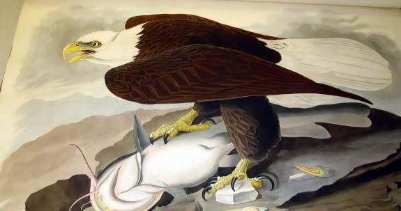 Eagle-Tales
